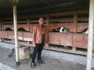 Wisata Alam Peternakan Domba Garut De Wisdom