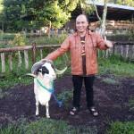Jalan Jalan ke WISDOM Wisata Alam Peternakan Domba Garut