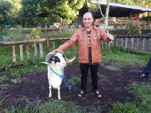 Wisdom Wisata Peternakan Domba garut
